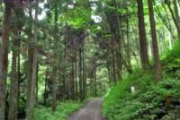 ミシュランの観光ガイドで三ツ星を得た東京の高尾山は人気の観光地だが、その近くに「裏高尾」があることはほとんど知られていない。ここで2009年4月、ある「森」が一般開放された。第二の人気スポットを目指すのか、それとも? 現地で人々の思いを聞いた。